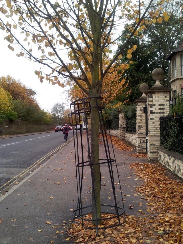 tree crinoline 2
