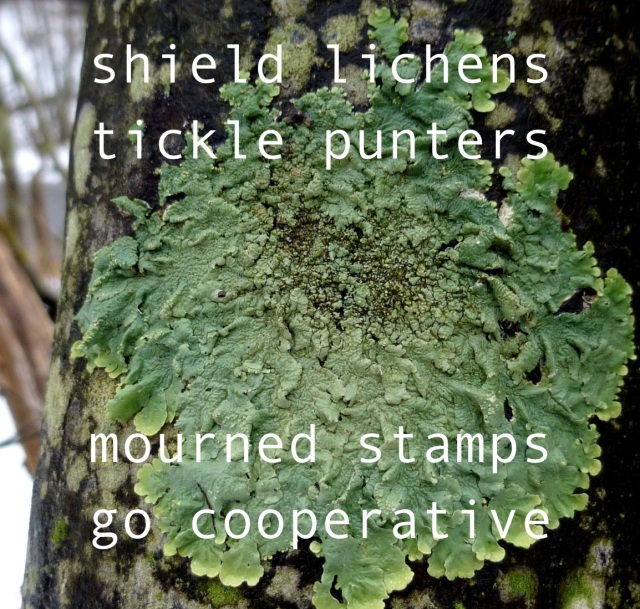 10-shield-lichen